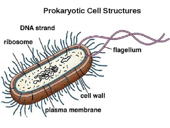 Organelles of Cells