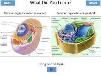 Organelles of Cells Interactive Tutorial