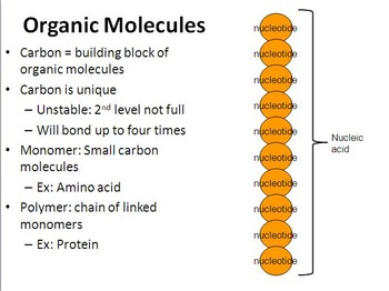 Organic Molecule & Carbohydrates Presentation (+ free internet worksheet)