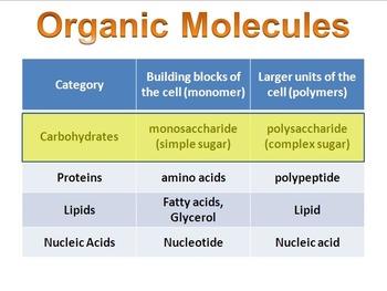 Organic Molecule & Carbohydrates Presentation (+ free inte