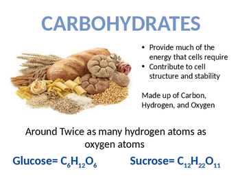 Organic and Inorganic Molecules in the Human Body