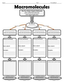Graphic Organizer for Organic or Macromolecules