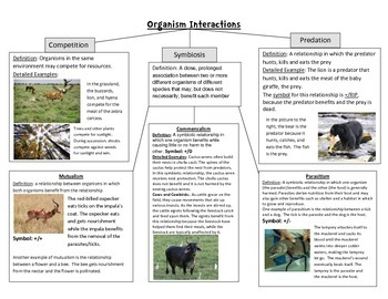 Organism Interactions Poster: Symbiosis, Predation, Competition