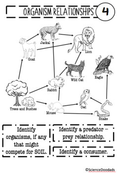Analyzing Organism Relationships Through Food Web Diagrams