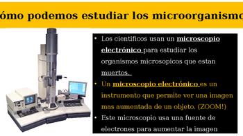 Organismos microscópicos