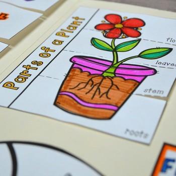 Organisms Lapbook (Plants and Animals)- First Grade {TEKS}
