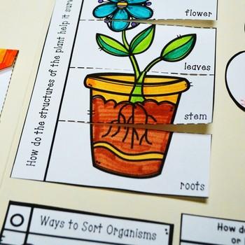 Organisms Lapbook (Plants and Animals)- Kindergarten {TEKS}