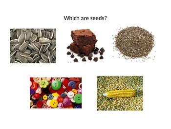 Organisms Review Game (PowerPoint)