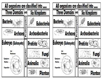 Organisms and Environments (Life Science) Mega Bundle #1