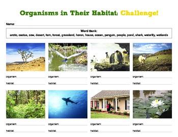 Organisms and Habitats Worksheet