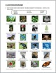 Organisms in Ecosystems - Review Worksheet {Editable}