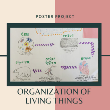 Organization Of Living Things Poster
