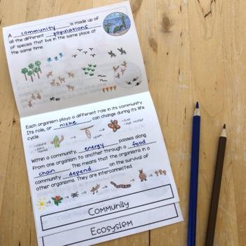 Organization of Ecosystems Flip Book