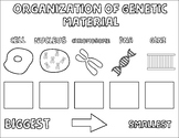 Organization of Genetic Material Coloring Notes