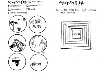 Organization of Life Coloring sheet population community e