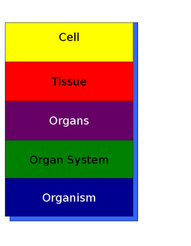 Cell Specialization