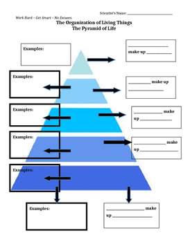 Organization of Living Things Guided Notes