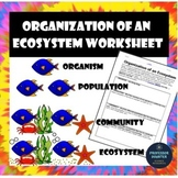 Organization Levels of an Ecosystem Worksheet Activity Lesson