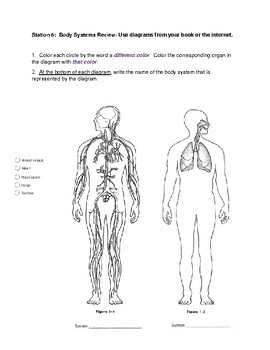 Organization of the Body - Intro to Anatomy Practical Lab
