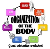 Organization of the Body Worksheet!