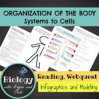 Organization of the human body: From cells to systems