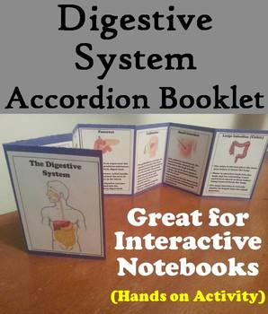 Organs of the Digestive System Activity: Human Body Systems Project