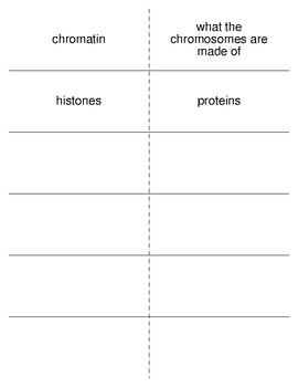 Origin of Life Vocabulary Flash Cards for Zoology