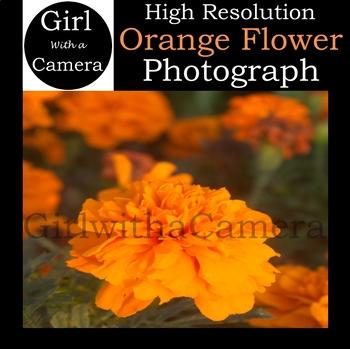 Original Orange Flower Stock Photo 2 - 100% original taken by me