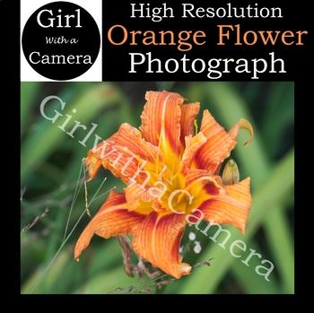 Original Orange Flower Stock Photo - 100% original taken by me