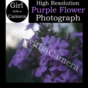 Original Purple Flower Stock Photograph 2 - 100% original taken by me
