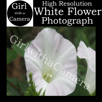 Original White Flower Stock Photograph - 100% original taken by me