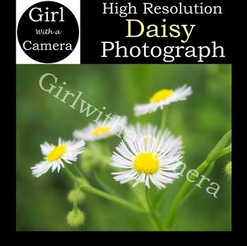 Original Daisy Stock Photograph - 100% original taken by me