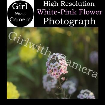 Original White-Pink Flower Stock Photograph - 100% original taken by me