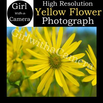 Original Yellow Flower Stock Photograph 2 - 100% original taken by me