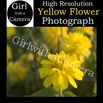 Original Yellow Flower Stock Photograph - 100% original taken by me