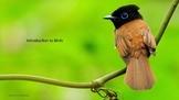 Ornithology: Introduction to Birds