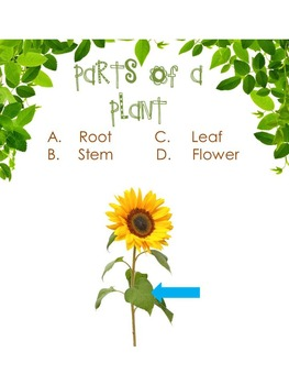 Osmo-Identifying Parts of a Plant