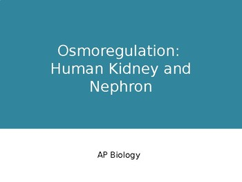 Osmoregulation: Human Kidney and Nephron