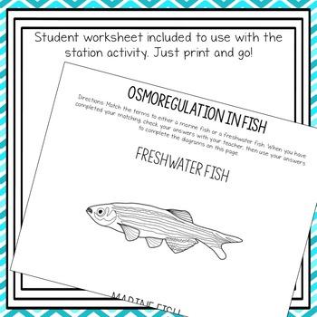 Osmoregulation in Fish Matching Activity