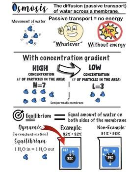 Osmosis Anchor Chart POSTER