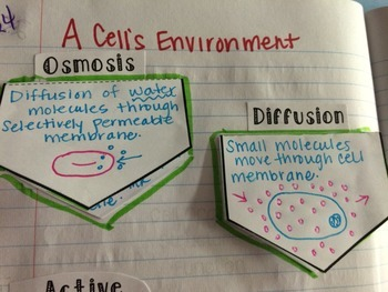 Osmosis & Diffusion Flip Flaps Science Interactive Notebook Activity