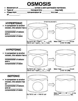 Osmosis Worksheet