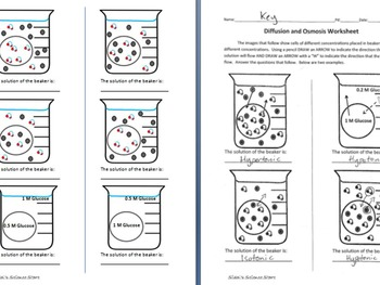 Osmosis and Diffusion Worksheet by Sidol's Science Store | TpT
