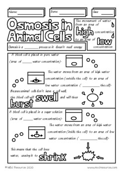 Osmosis in Animal Cells Middle High School Biology Doodle Review