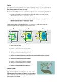 Osmosis starter activity