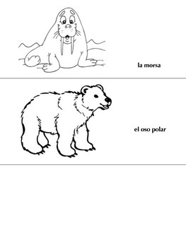 Oso Polar, Oso Polar