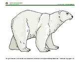 Oso Polar, Oso Polar Qué es ese Ruido?: book puppets