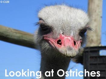 African Birds: Ostrich - PDF presentation
