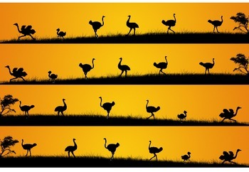 Ostrich Borders