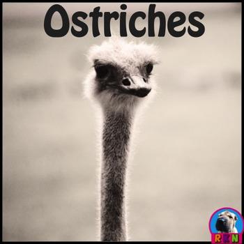 Ostriches - PowerPoint & Activities